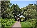 TQ5811 : Cuckoo Trail near Hellingly by Paul Gillett