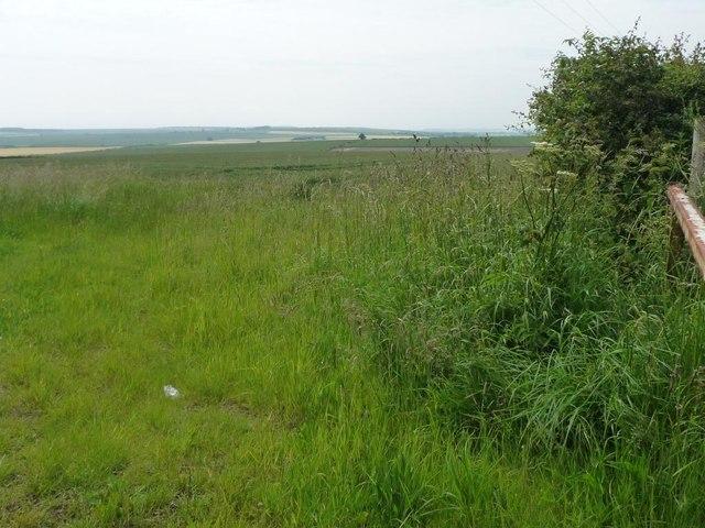 Uncultivated field corner