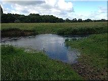 TL1396 : Cattle Ford on the Back Dike by John Walton