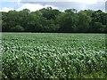 TF1201 : Farmland towards Brakes Wood by JThomas