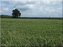 TF1202 : Farmland west of Marholm by JThomas