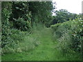 TL1499 : Track by Salters Wood by JThomas