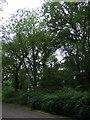 TF1501 : Grimeshaw Wood by JThomas
