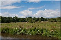 SU9946 : River Wey near Broadford by Ian Capper