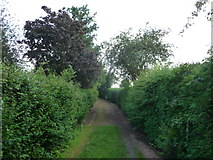 SO5628 : Path south out of King's Caple by Jeremy Bolwell