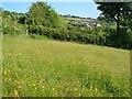 SX6970 : Field near Seale's Stoke by Derek Harper