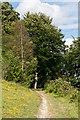 TQ1048 : North Downs Way by Ian Capper