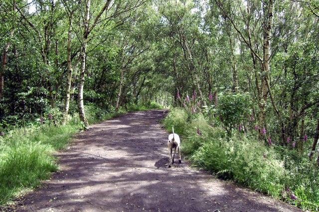 Fairburn Ings Woodland Walk © derek dye cc-by-sa/2 0