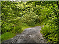 SD6821 : Bridleway to Darwen Moor by David Dixon