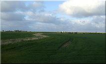 NU0544 : Farmland near Goswick by JThomas