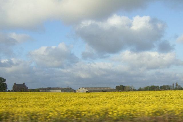 Farmland, Fenham
