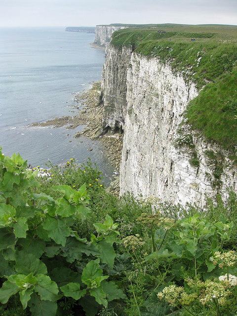 Clifftop vegetation