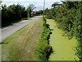 ST3964 : Algae-covered rhyne, East Hewish by Jaggery