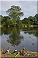 TQ2648 : New Pond, Earlswood Lakes by Ian Capper