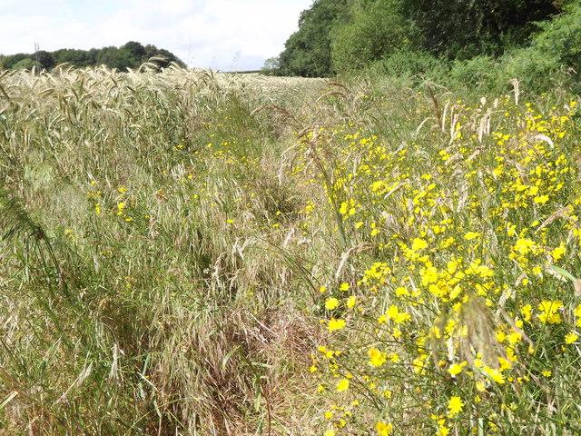 Field Margin, Wyke