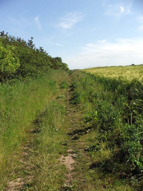 Path alongside Pea Field