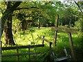 SX6975 : Open woodland, Shallowford by Derek Harper