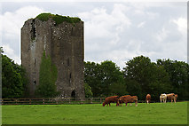 S1834 : Castles of Munster: Barrettstown, Tipperary by Mike Searle