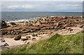 NJ1570 : Sandstone Shore by Anne Burgess