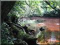 NS7254 : The Avon Water at Chatelherault by M J Richardson