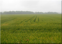 SK6513 : Crop field off Gaddesby Lane by JThomas