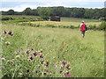SU5628 : Chalk Grassland Above Tichborne by Colin Smith