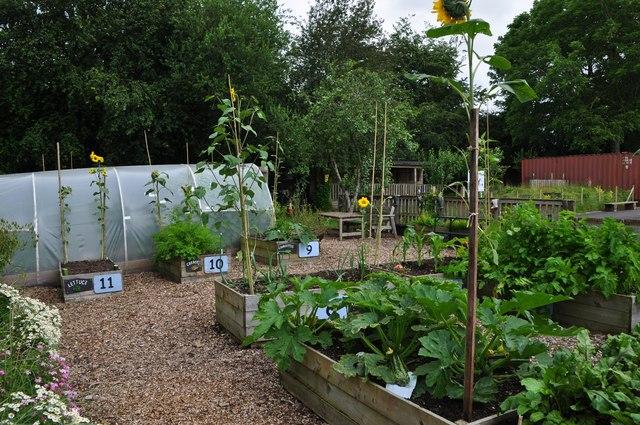 Tiverton : Two Moors Primary School - Kitchen Garden