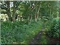 SU9368 : Footpath, Sunninghill by Alan Hunt