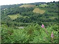 ST1098 : Looking across Cwm Bargoed by Robin Drayton
