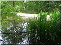 TQ2997 : Corner of pond, Trent Park by David Howard