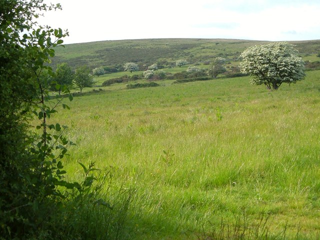 Field, Corndon Down