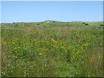 NZ2796 : Wild flowers and dunes, Druridge Links by JThomas