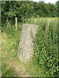 SP9310 : Trig pillar near Langton Wood north of Wigginton by Rob Farrow