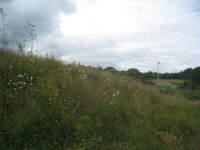Wild flower bank and wind turbine