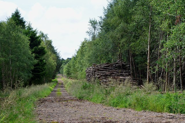 Estate road and timber stack, Lanton Moor woodland