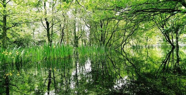 Agden shallows