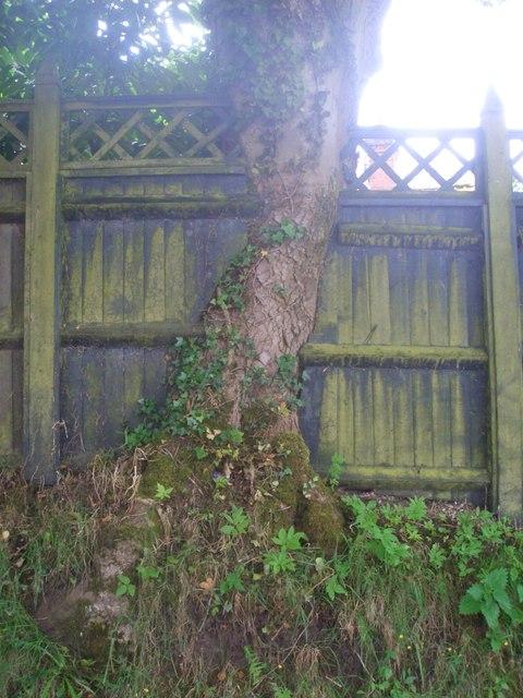 Tree / fence interface