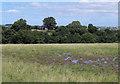NZ1329 : Waterlogged ground of field above Linburn Beck by Trevor Littlewood