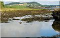 J4968 : The Loughshore near Comber (11) by Albert Bridge