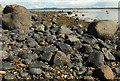 J4968 : The loughshore, Rough Island near Comber (1) by Albert Bridge
