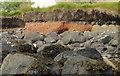 J4968 : The loughshore, Rough Island near Comber (2) by Albert Bridge