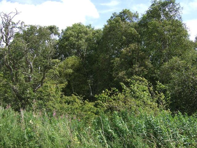 Woodland beside Prestwick Carr Road