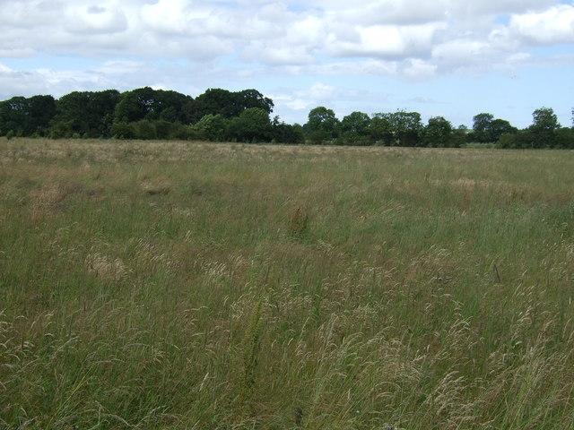 Farmland near Dinnington