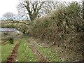 SX8553 : Flailed hedge near Lapthorne Farm by Robin Stott