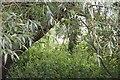 SU2298 : Pillbox through the trees by Bill Nicholls