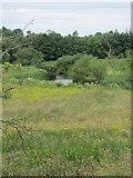 G6926 : Ballysadare River by Richard Webb