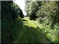 TL1338 : Footpath besides the meandering River Hit by Michael Trolove