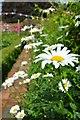 TF9717 : Flowers at Gressenhall by Ashley Dace