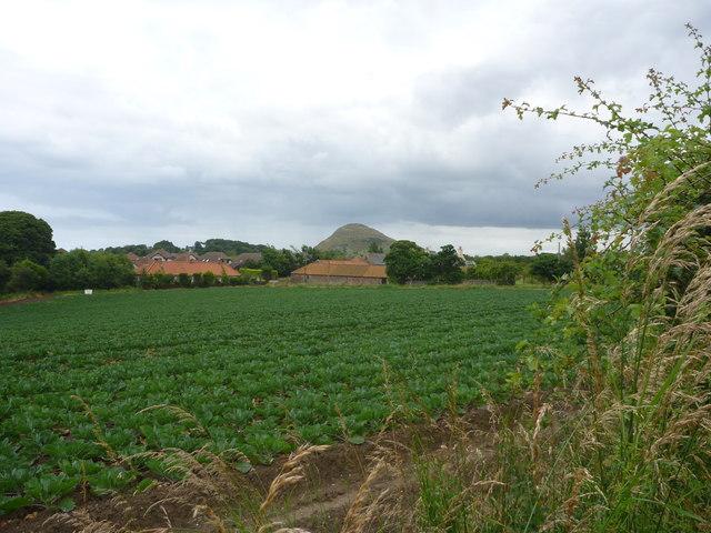 Rural East Lothian : The Rural-Urban Fringe near Williamstone Farm, North Berwick