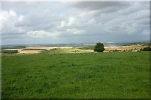 SU5482 : View from Lowbury Hill by Fly